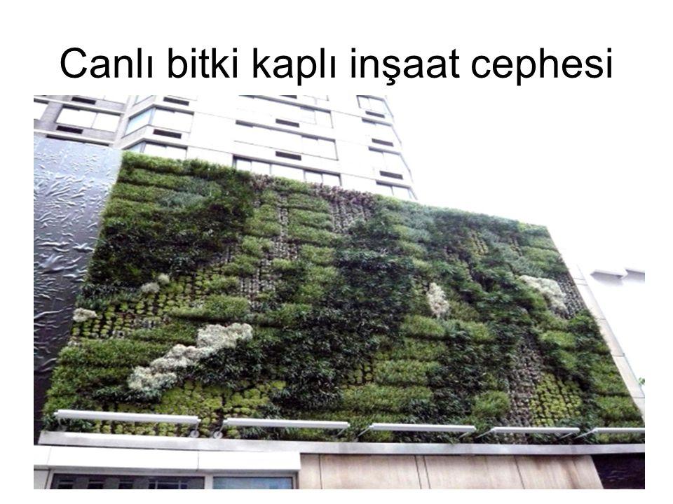 Canlı bitki kaplı inşaat cephesi 39