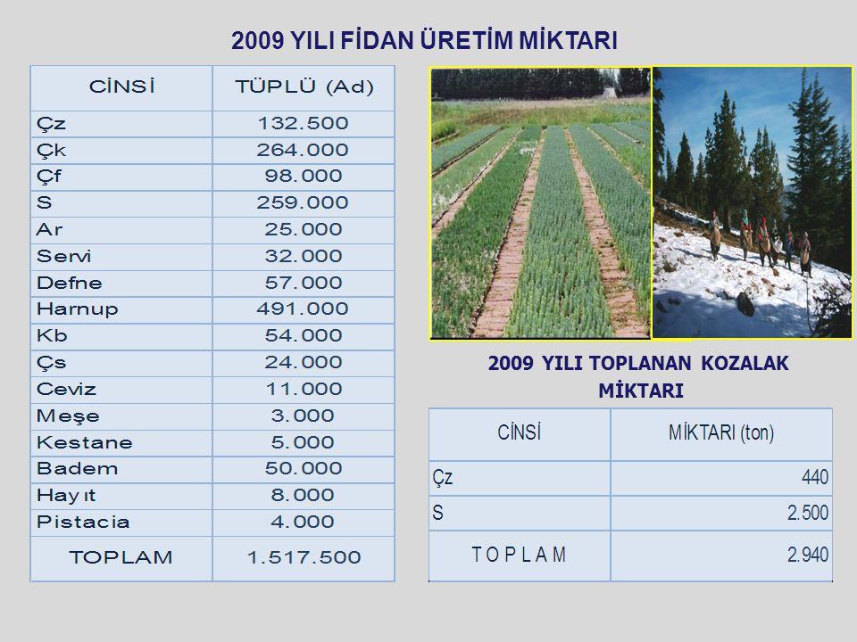 2009 YILI FİDAN ÜRETİM MİKTARI 2009 YILI TOPLANAN KOZALAK MİKTARI
