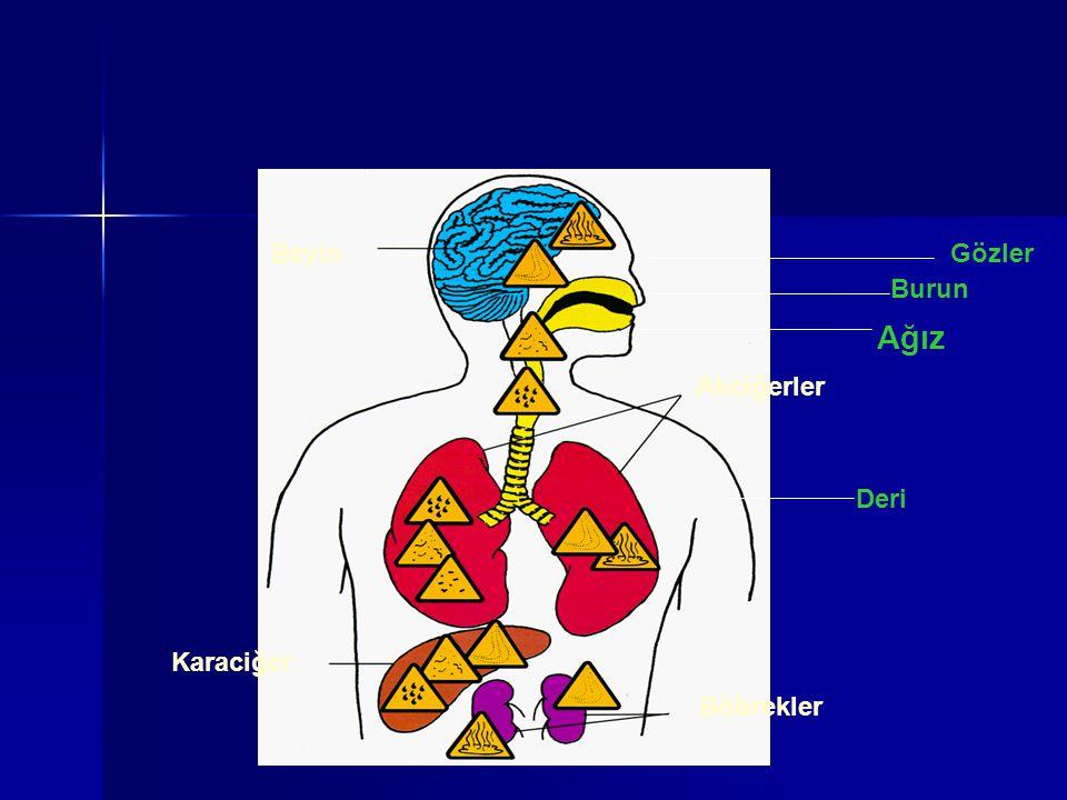 Beyin Akciğerler Karaciğer Böbrekler Deri Gözler Burun Ağız
