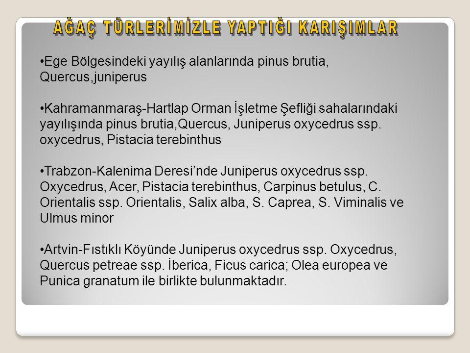 •Ege Bölgesindeki yayılış alanlarında pinus brutia, Quercus,juniperus •Kahramanmaraş-Hartlap Orman İşletme Şefliği sahalarındaki yayılışında pinus brutia,Quercus, Juniperus oxycedrus ssp.