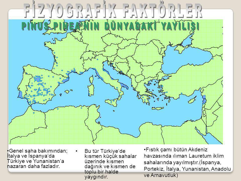 •Bu tür Türkiye'de kısmen küçük sahalar üzerinde kısmen dağınık ve kısmen de toplu bir halde yaygındır.