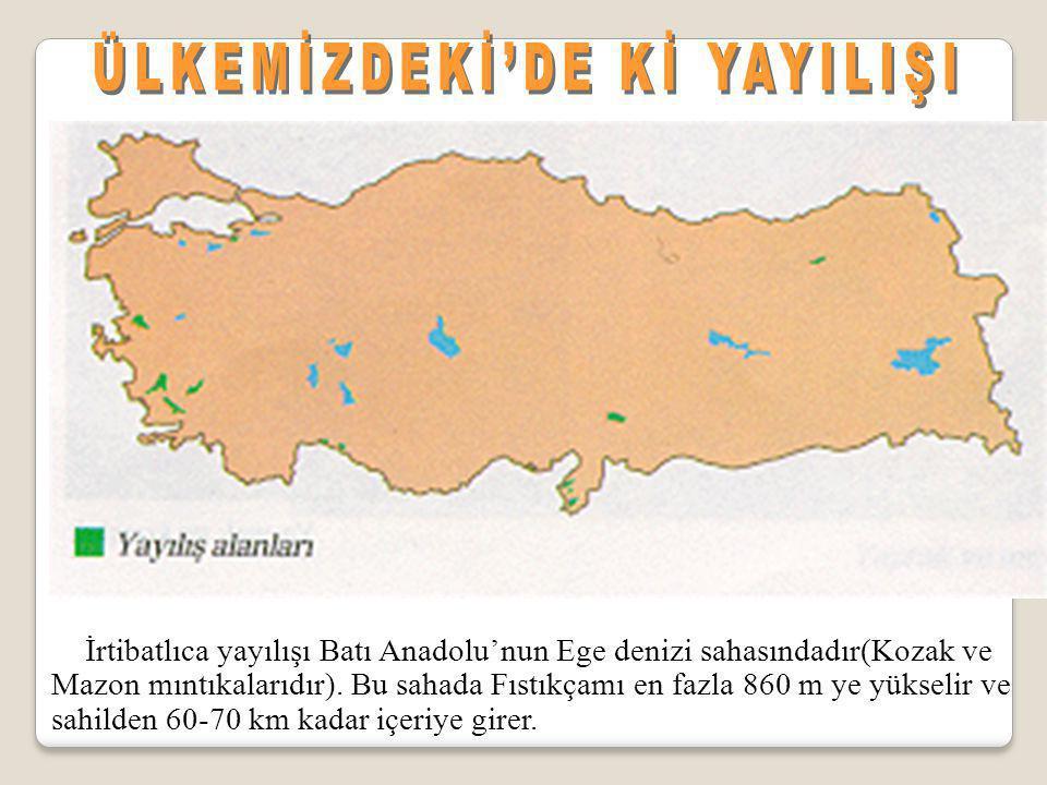 İrtibatlıca yayılışı Batı Anadolu'nun Ege denizi sahasındadır(Kozak ve Mazon mıntıkalarıdır). Bu sahada Fıstıkçamı en fazla 860 m ye yükselir ve sahil