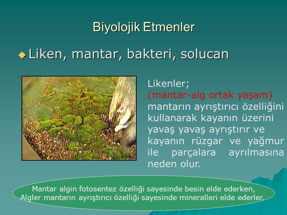 Biyolojik Etmenler  Liken, mantar, bakteri, solucan Likenler; (mantar-alg ortak yaşam) mantarın ayrıştırıcı özelliğini kullanarak kayanın üzerini yav