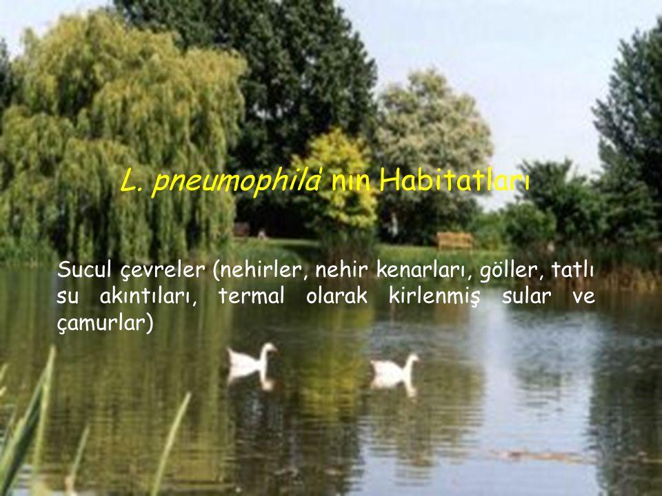 L. pneumophila' nın Habitatları Sucul çevreler (nehirler, nehir kenarları, göller, tatlı su akıntıları, termal olarak kirlenmiş sular ve çamurlar)