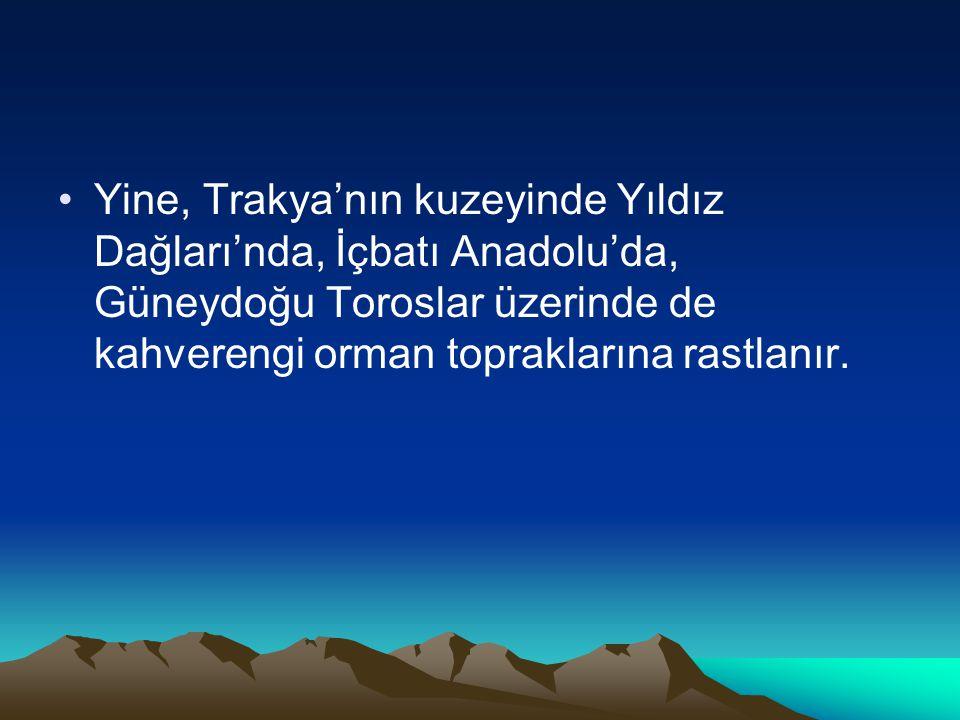 •Yine, Trakya'nın kuzeyinde Yıldız Dağları'nda, İçbatı Anadolu'da, Güneydoğu Toroslar üzerinde de kahverengi orman topraklarına rastlanır.