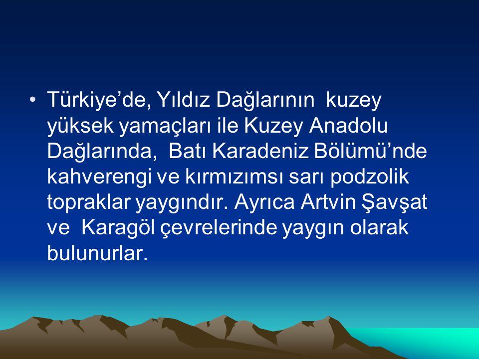 •Türkiye'de, Yıldız Dağlarının kuzey yüksek yamaçları ile Kuzey Anadolu Dağlarında, Batı Karadeniz Bölümü'nde kahverengi ve kırmızımsı sarı podzolik t