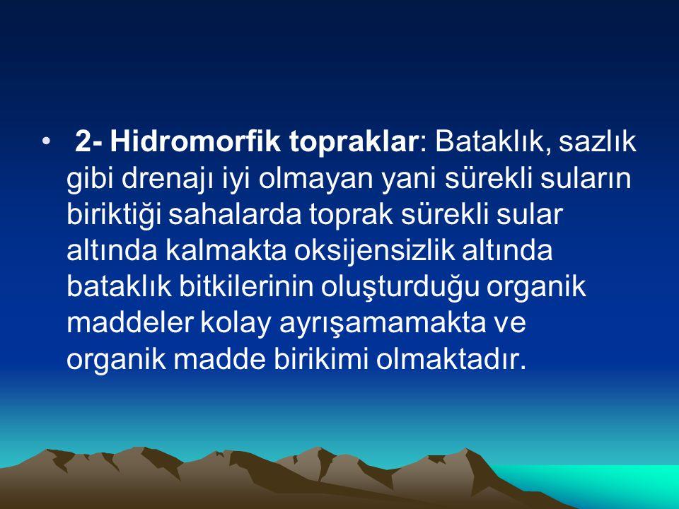 • 2- Hidromorfik topraklar: Bataklık, sazlık gibi drenajı iyi olmayan yani sürekli suların biriktiği sahalarda toprak sürekli sular altında kalmakta o