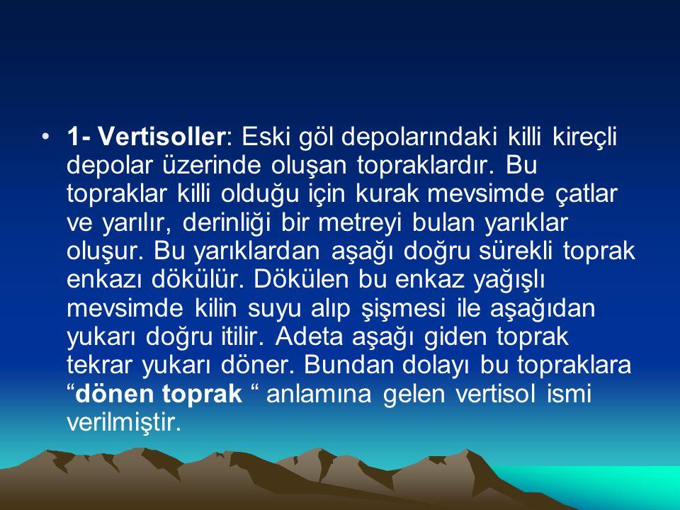 •1- Vertisoller: Eski göl depolarındaki killi kireçli depolar üzerinde oluşan topraklardır. Bu topraklar killi olduğu için kurak mevsimde çatlar ve ya