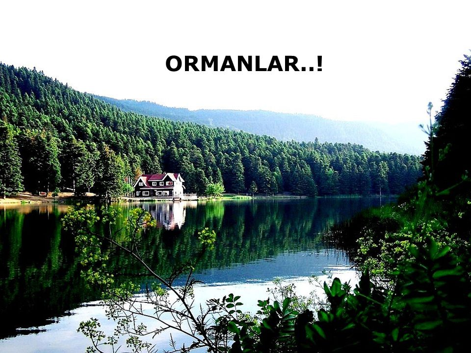 ORMANLAR..!