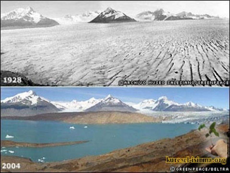 •-Kuzey kutbundaki deniz buzulları 2100 e kadar yüzde 22-33 arasında azalacak, • • Antarktika da ise tamamen ortadan kalkabilecek.