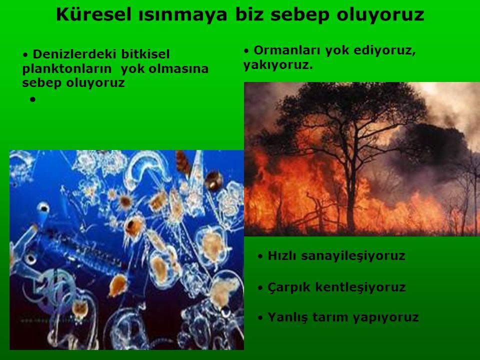 Küresel ısınmaya biz sebep oluyoruz • • Denizlerdeki bitkisel planktonların yok olmasına sebep oluyoruz • Ormanları yok ediyoruz, yakıyoruz. • Hızlı s
