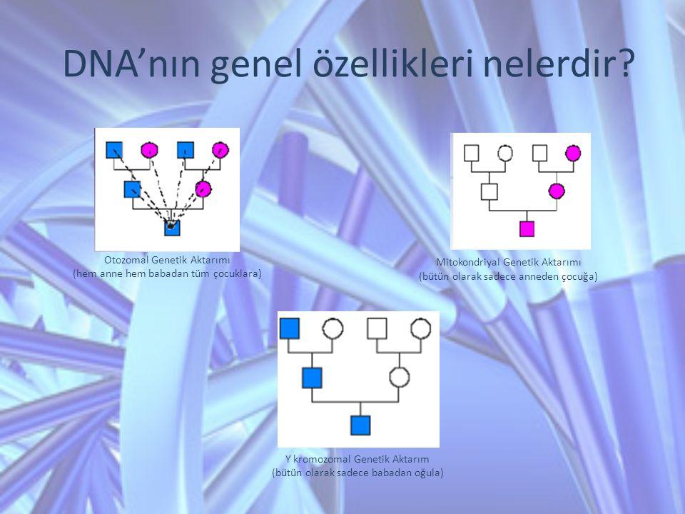 DNA'nın genel özellikleri nelerdir? Otozomal Genetik Aktarımı (hem anne hem babadan tüm çocuklara) Mitokondriyal Genetik Aktarımı (bütün olarak sadece