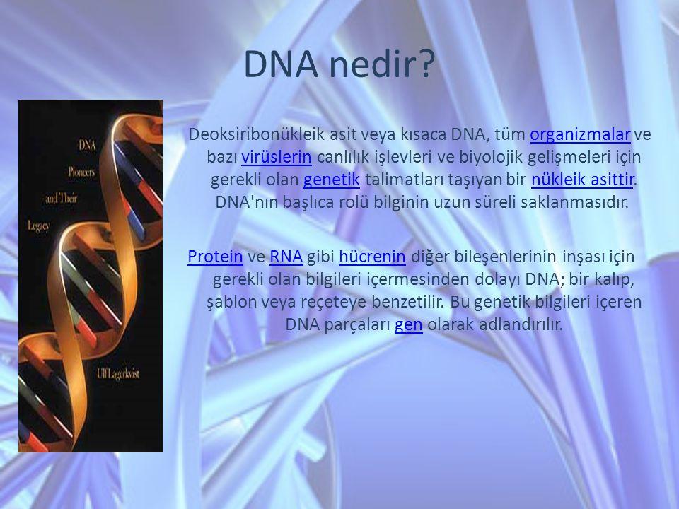DNA nedir? Deoksiribonükleik asit veya kısaca DNA, tüm organizmalar ve bazı virüslerin canlılık işlevleri ve biyolojik gelişmeleri için gerekli olan g