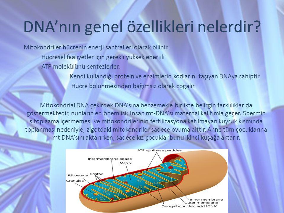 Mitokondriler hücrenin enerji santralleri olarak bilinir. Hücresel faaliyetler için gerekli yüksek enerjili ATP molekülünü sentezlerler. Kendi kulland