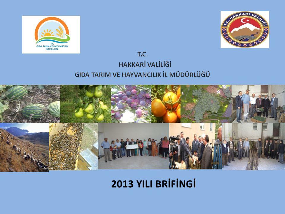 2013 Yılı