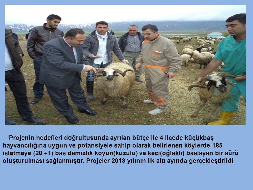 Projenin hedefleri doğrultusunda ayrılan bütçe ile 4 ilçede küçükbaş hayvancılığına uygun ve potansiyele sahip olarak belirlenen köylerde 185 işletmey