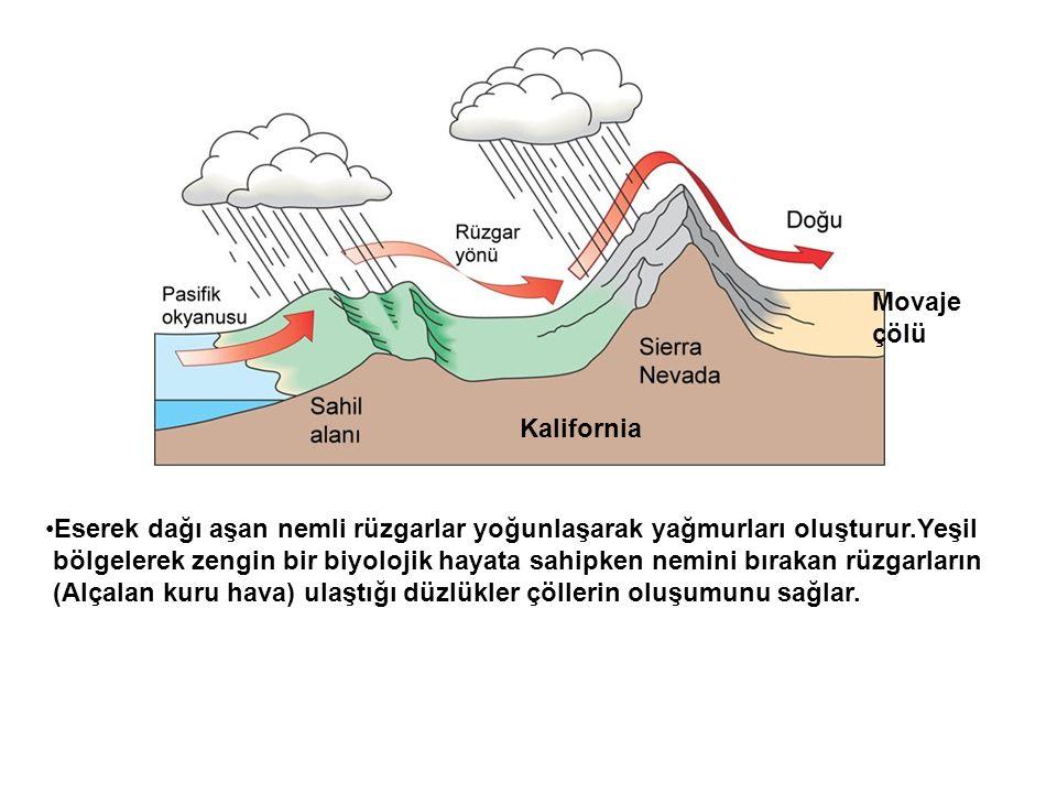 •Eserek dağı aşan nemli rüzgarlar yoğunlaşarak yağmurları oluşturur.Yeşil bölgelerek zengin bir biyolojik hayata sahipken nemini bırakan rüzgarların (