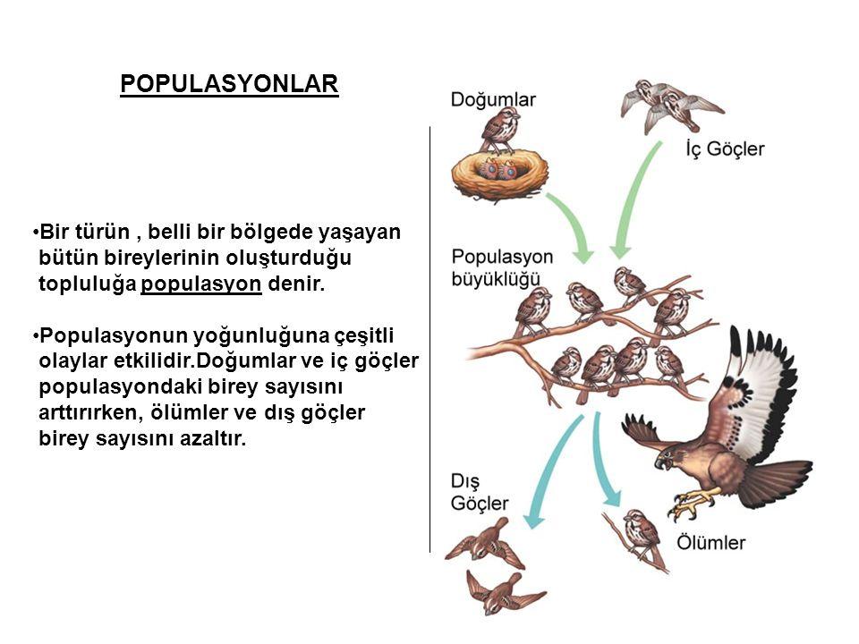 POPULASYONLAR •Bir türün, belli bir bölgede yaşayan bütün bireylerinin oluşturduğu topluluğa populasyon denir. •Populasyonun yoğunluğuna çeşitli olayl