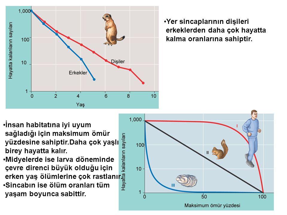•İnsan habitatına iyi uyum sağladığı için maksimum ömür yüzdesine sahiptir.Daha çok yaşlı birey hayatta kalır. •Midyelerde ise larva döneminde çevre d