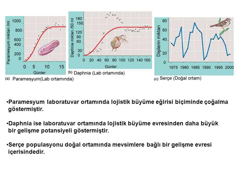 •Paramesyum laboratuvar ortamında lojistik büyüme eğirisi biçiminde çoğalma göstermiştir. •Daphnia ise laboratuvar ortamında lojistik büyüme evresinde