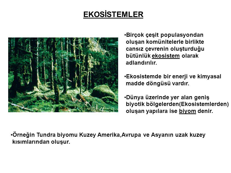 EKOSİSTEMLER •Birçok çeşit populasyondan oluşan komünitelerle birlikte cansız çevrenin oluşturduğu bütünlük ekosistem olarak adlandırılır. •Ekosistemd