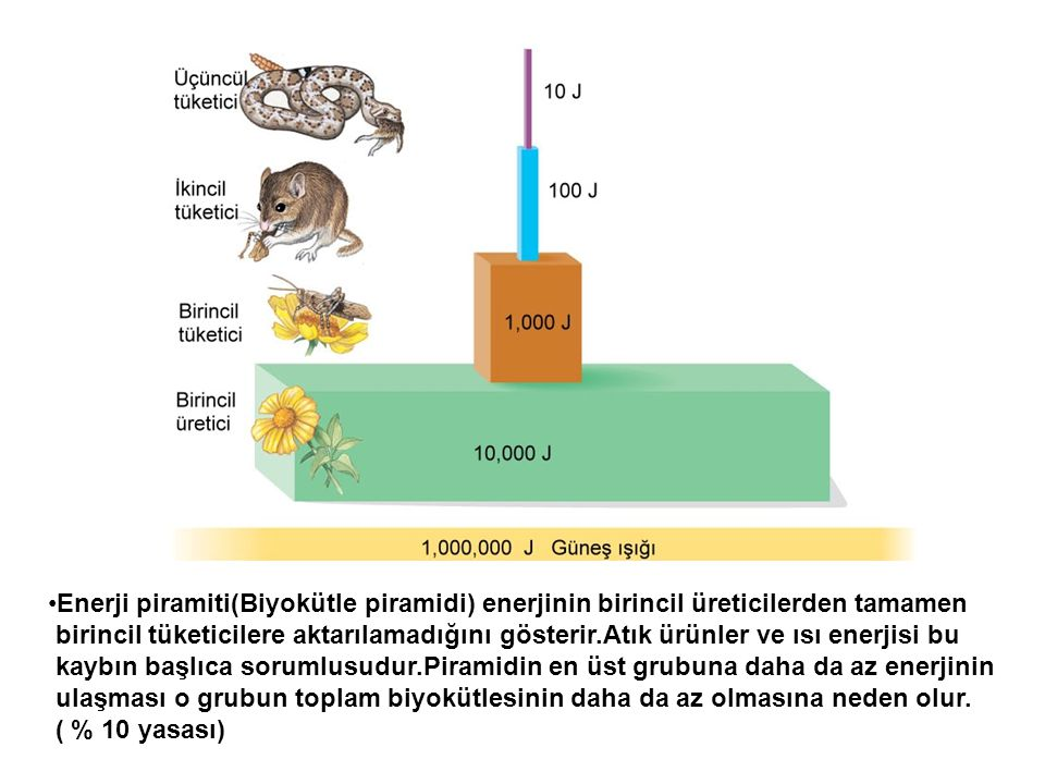•Enerji piramiti(Biyokütle piramidi) enerjinin birincil üreticilerden tamamen birincil tüketicilere aktarılamadığını gösterir.Atık ürünler ve ısı ener