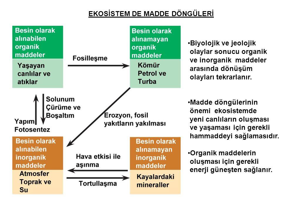 EKOSİSTEM DE MADDE DÖNGÜLERİ •Biyolojik ve jeolojik olaylar sonucu organik ve inorganik maddeler arasında dönüşüm olayları tekrarlanır. •Madde döngüle