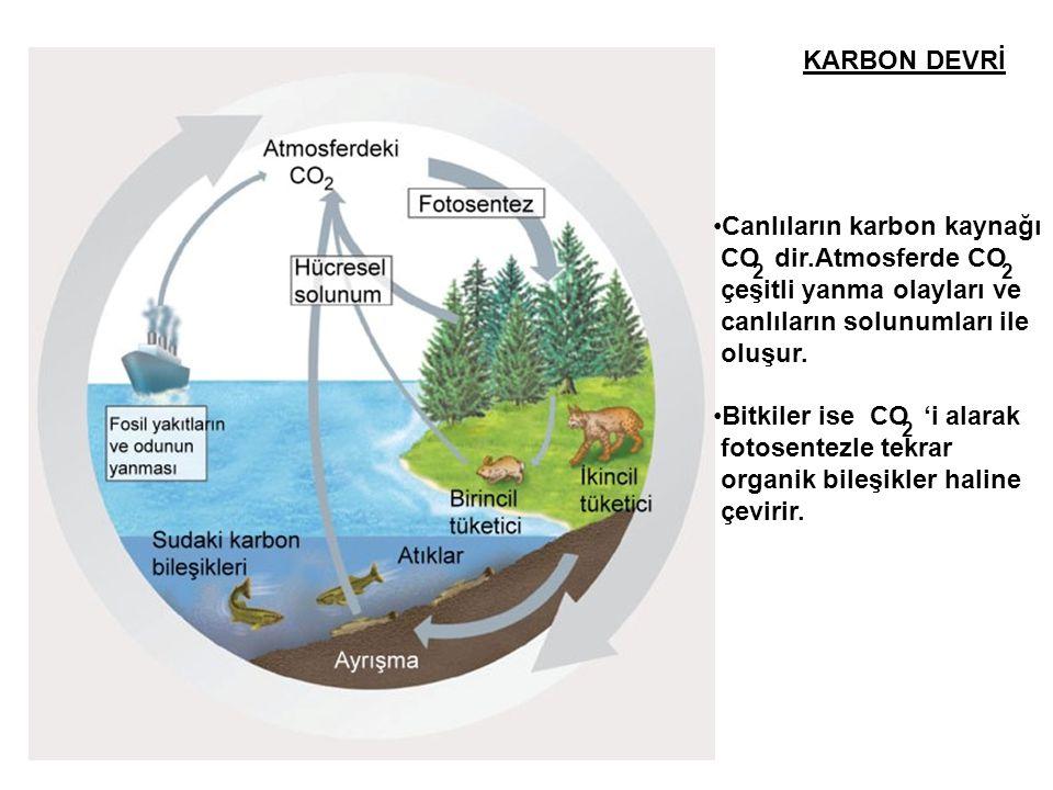 KARBON DEVRİ •Canlıların karbon kaynağı CO dir.Atmosferde CO çeşitli yanma olayları ve canlıların solunumları ile oluşur. •Bitkiler ise CO 'i alarak f