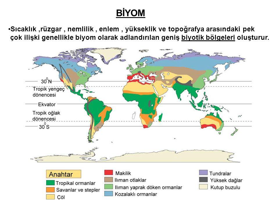 BİYOM •Sıcaklık,rüzgar, nemlilik, enlem, yükseklik ve topoğrafya arasındaki pek çok ilişki genellikle biyom olarak adlandırılan geniş biyotik bölgeler