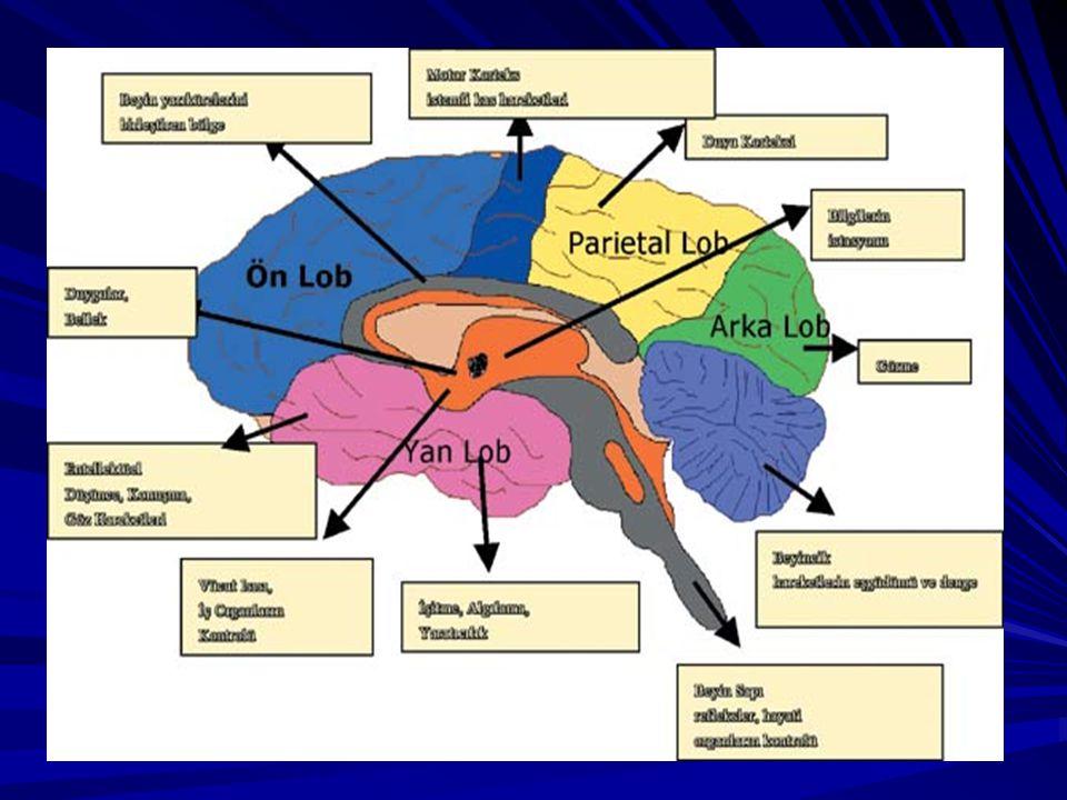 ÖĞRENME İLE İLGİLİ BAZI ÖNERİLER-7 BEYİN VE ÇEVRE: Beynimizin absorpladığı bilgilerin yüzde seksen – doksanı görseldir.