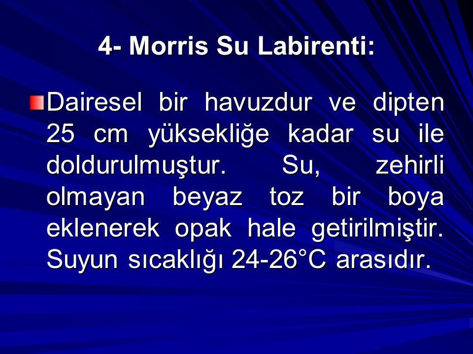4- Morris Su Labirenti: Dairesel bir havuzdur ve dipten 25 cm yüksekliğe kadar su ile doldurulmuştur. Su, zehirli olmayan beyaz toz bir boya eklenerek