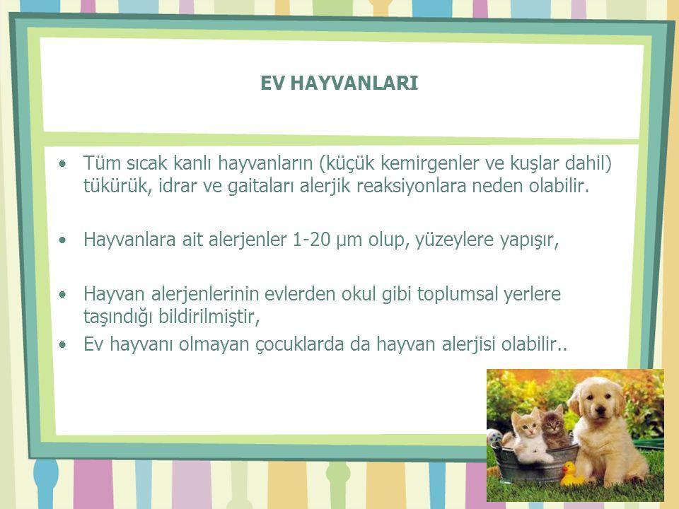 EV HAYVANLARI •Tüm sıcak kanlı hayvanların (küçük kemirgenler ve kuşlar dahil) tükürük, idrar ve gaitaları alerjik reaksiyonlara neden olabilir. •Hayv