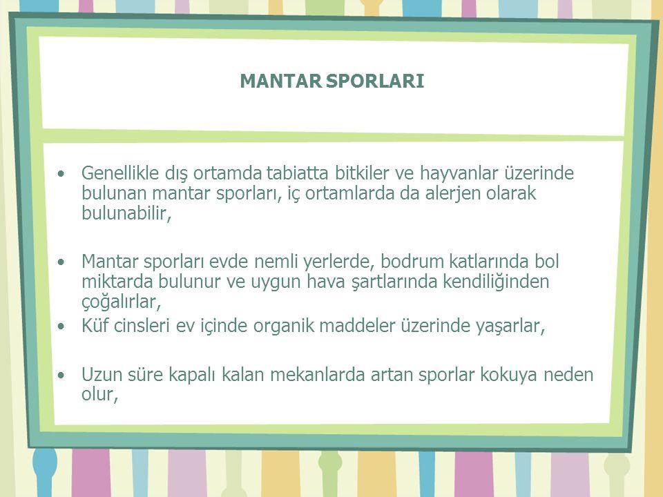 MANTAR SPORLARI •Genellikle dış ortamda tabiatta bitkiler ve hayvanlar üzerinde bulunan mantar sporları, iç ortamlarda da alerjen olarak bulunabilir,