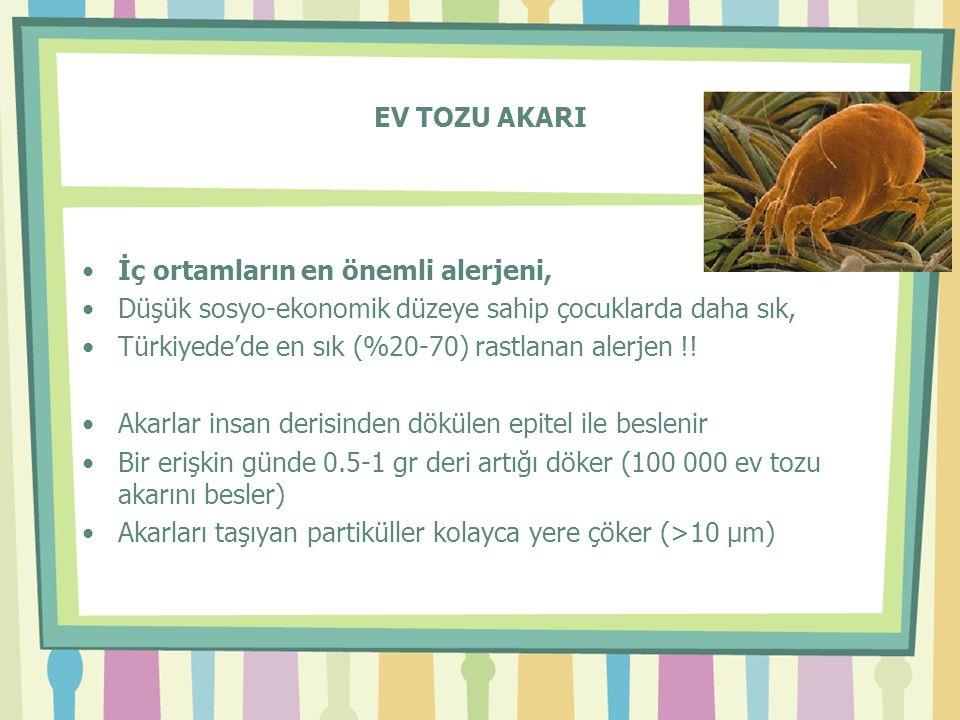 EV TOZU AKARI •İç ortamların en önemli alerjeni, •Düşük sosyo-ekonomik düzeye sahip çocuklarda daha sık, •Türkiyede'de en sık (%20-70) rastlanan alerj