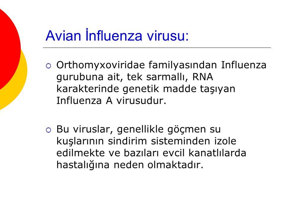 Avian İnfluenza virusu:  Orthomyxoviridae familyasından Influenza gurubuna ait, tek sarmallı, RNA karakterinde genetik madde taşıyan Influenza A viru