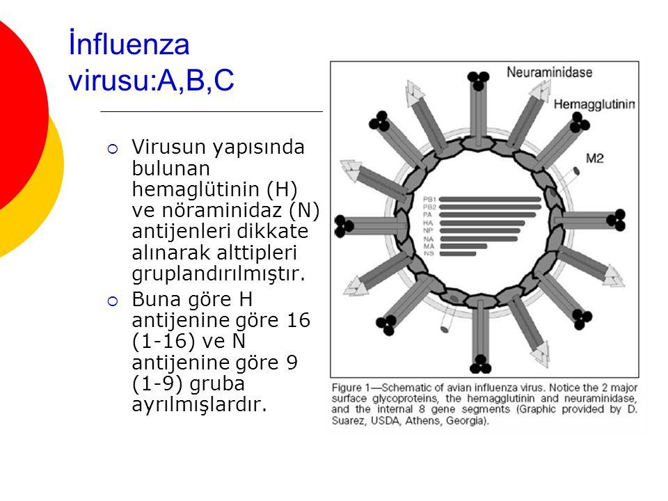 İnfluenza virusu:A,B,C  Virusun yapısında bulunan hemaglütinin (H) ve nöraminidaz (N) antijenleri dikkate alınarak alttipleri gruplandırılmıştır.