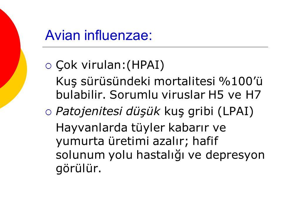 Avian influenzae:  Çok virulan:(HPAI) Kuş sürüsündeki mortalitesi %100'ü bulabilir. Sorumlu viruslar H5 ve H7  Patojenitesi düşük kuş gribi (LPAI) H