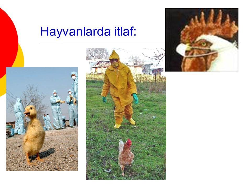 Hayvanlarda itlaf: