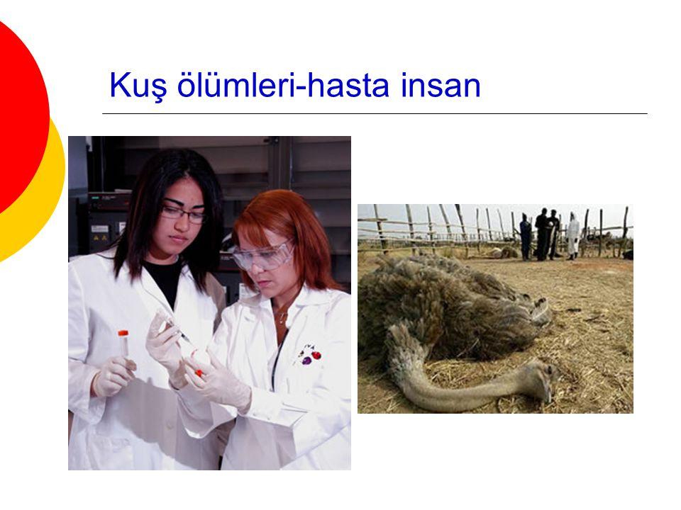 Kuş ölümleri-hasta insan