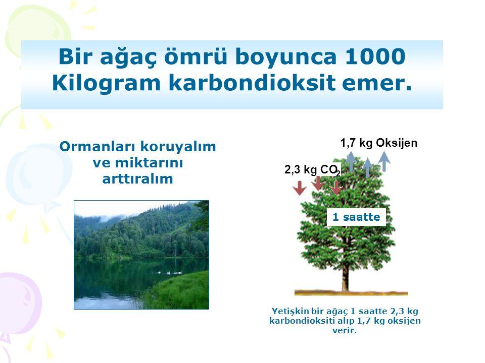 Ormanları koruyalım ve miktarını arttıralım 1,7 kg Oksijen 2,3 kg CO 2 1 saatte Yetişkin bir ağaç 1 saatte 2,3 kg karbondioksiti alıp 1,7 kg oksijen v