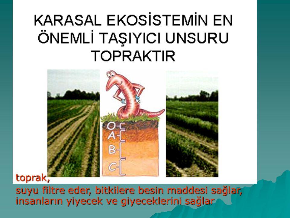 toprak, suyu filtre eder, bitkilere besin maddesi sağlar, insanların yiyecek ve giyeceklerini sağlar