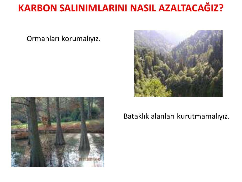 Ormanları korumalıyız. Bataklık alanları kurutmamalıyız.