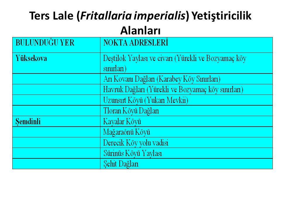 Ters Lale (Fritallaria imperialis) Yetiştiricilik Alanları