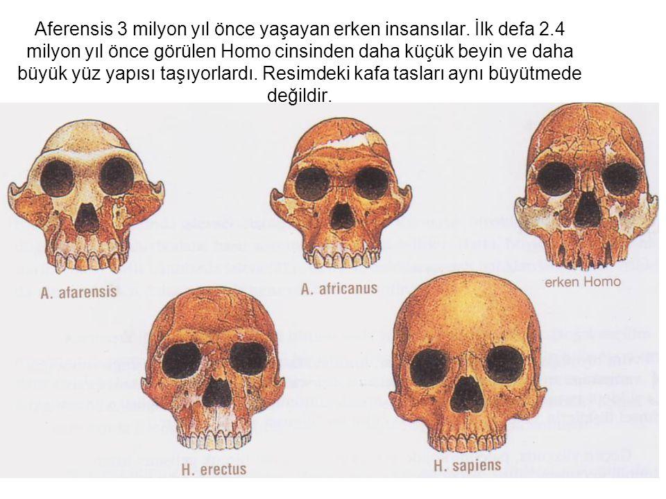 Aferensis 3 milyon yıl önce yaşayan erken insansılar. İlk defa 2.4 milyon yıl önce görülen Homo cinsinden daha küçük beyin ve daha büyük yüz yapısı ta