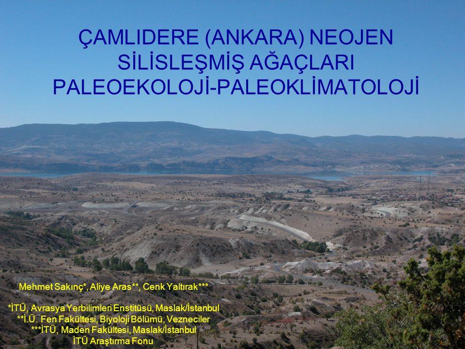 Türkiye'nin önemli silisleşmiş fosil ağaç lokalitelerinden biri de Çamlıdere (Ankara) çevresidir.