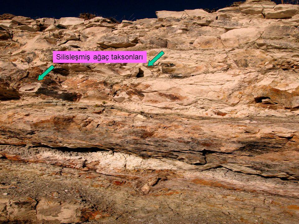 Volkaniklerin kenarlarında yerleşen bitki örtüsünün neredeyse bütününü ortadan kaldıran Çamlıdere katastrofunun olduğu dönemde bölge yüksek bir plato şeklindedir.