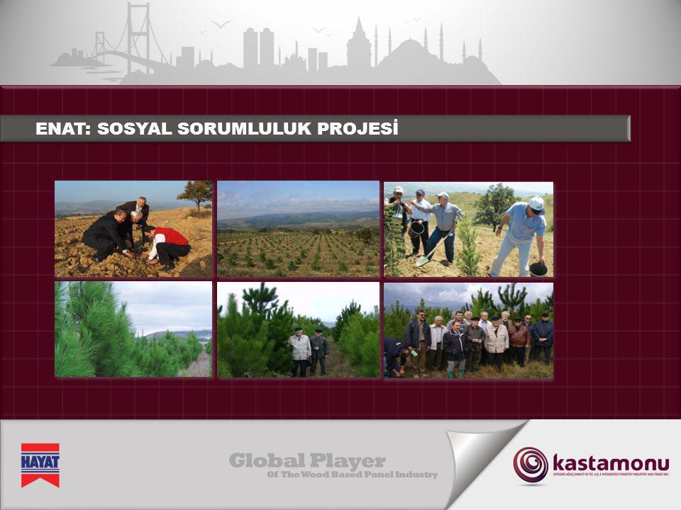 OKALİPTÜS FİDESİ EKİMİ ORGANİZASYONU • 2012 yılında 35.000 okaliptüs fidesi ekildi.