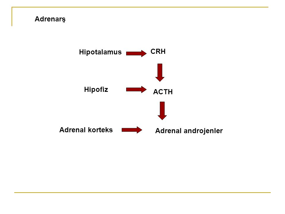 CRH ACTH Adrenal androjenler Hipotalamus Hipofiz Adrenal korteks Adrenarş