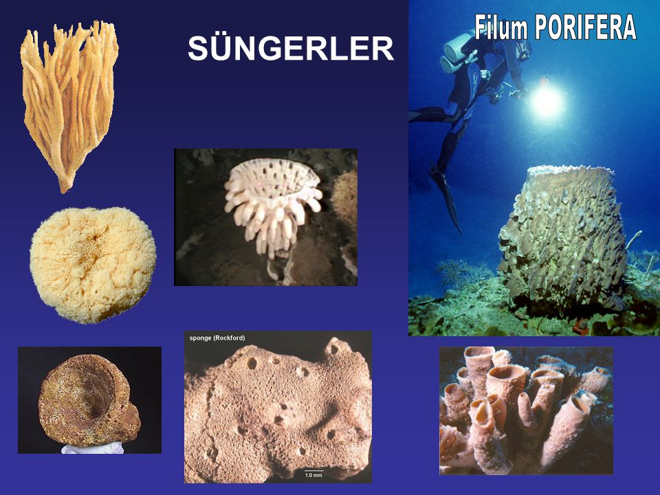 Paleontoloji dersinde fosillerini inceleyeceğimiz bazı gruplar