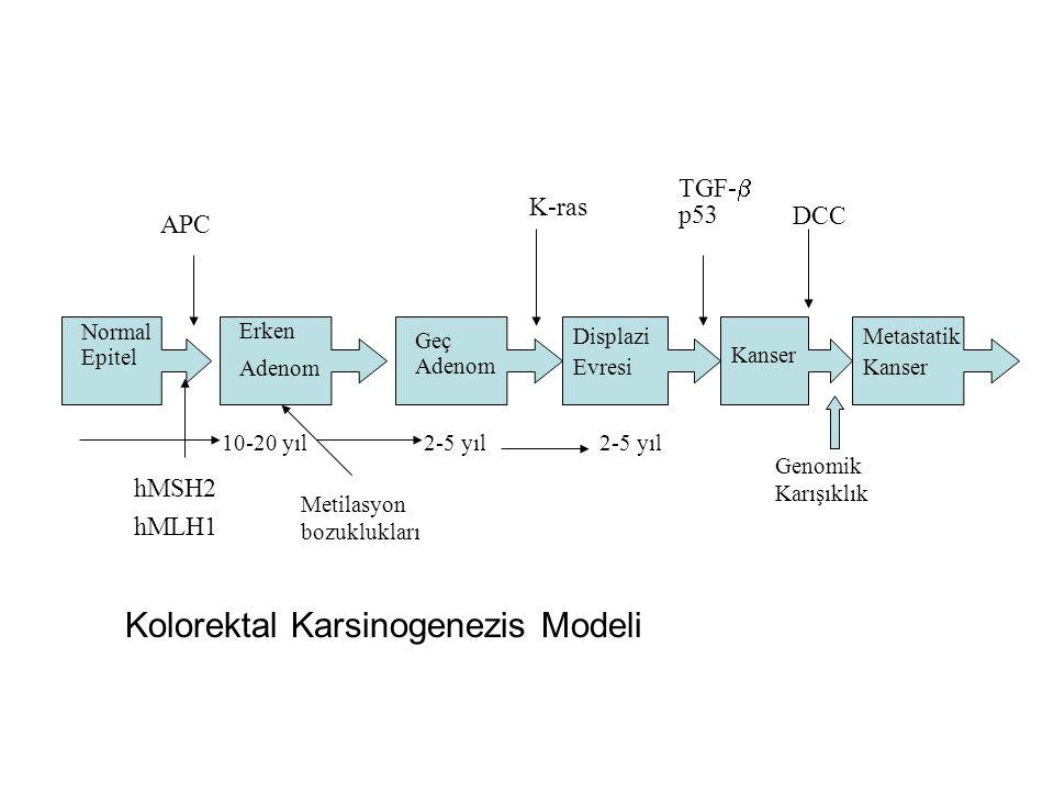 Normal Epitel Erken Adenom Geç Adenom Displazi Evresi Kanser Metastatik Kanser APC hMSH2 hMLH1 K-ras TGF-  p53 DCC Metilasyon bozuklukları 10-20 yıl2